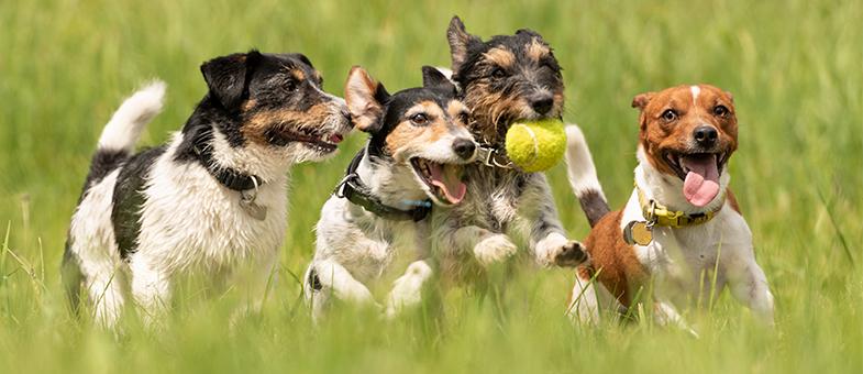 Richtige Hundeschule finden
